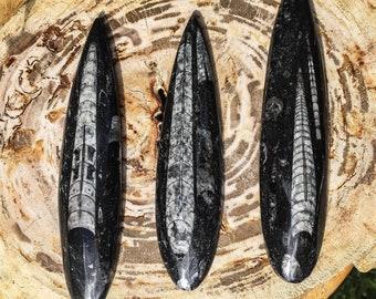 Large Orthoceras Fossil