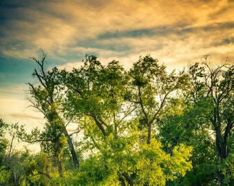 A Tree by the River At Sunset, Nature Photography, Digital Photography Download, Tree Photo Download, Stock Photo Download, Sunset Photos