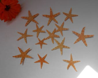 Natural Starfish - sold per 5