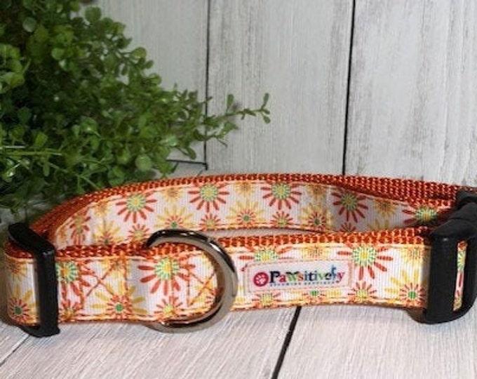 Orange Summer Flowers, Dog Collar