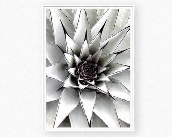 Succulent print, cactus print, botanical print, succulent art wall, green print, bohemian wall, cactus photo succulent photo