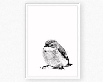 Bird print, bird black and white photography, animal print, nursery animal wall art, bird printable