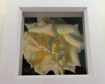 Romance 4x4 print