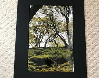 Forest Therapy 12x8 print in a A4 mounted frame