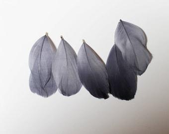 Light purple feather