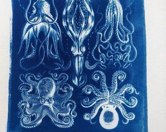 Cephalopods (Gamochonia) from Haeckel (plate 54), cyanotype