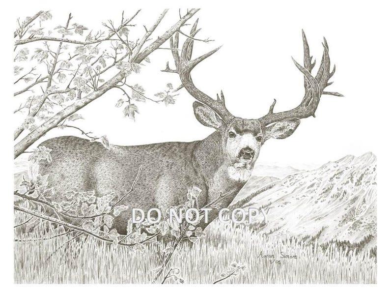 Impresión Del Arte Occidental Fauna Dibujo De Un Venado Bura Etsy