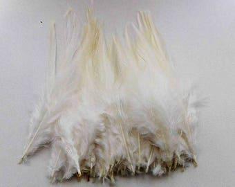 50 plumes de coq écru 10-15cm