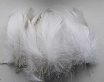 50 5-15cm white goose feathers