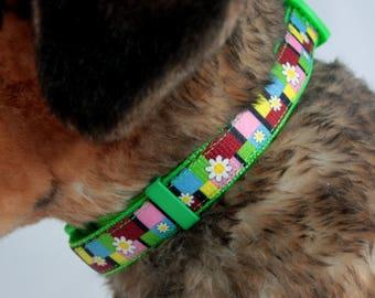 Medium Groovy Daisies Dog Collar