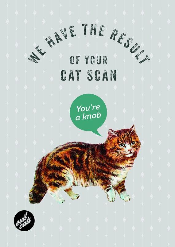 Funny Birthday Card Cat Evil