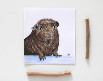 Original Guinea Pig Drawing: Coloured Pencil Realism / guinea pig cute art