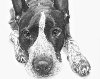 Pet portrait  - custom drawn realistic characterful portrait of cat or dog