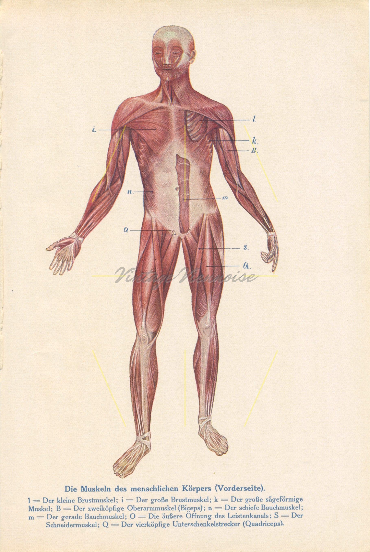 Charmant Anatomie Des Leistenkanales Zeitgenössisch - Anatomie Und ...