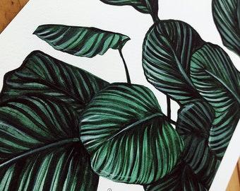 Calathea Orbifolia Leaf Watercolour Giclee Print A4
