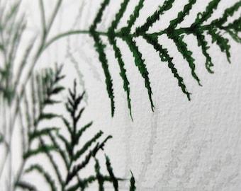 Asparagus fern Leaf Watercolour Giclee Print A4