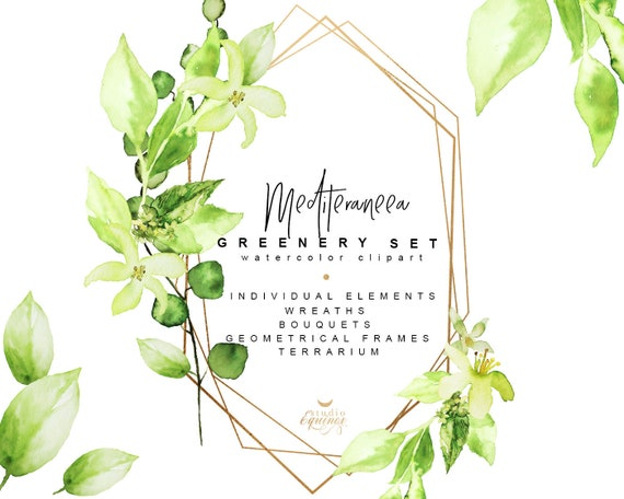 Watercolor Greenery Clipart Olive Branch Olive Leaves Lemon Etsy