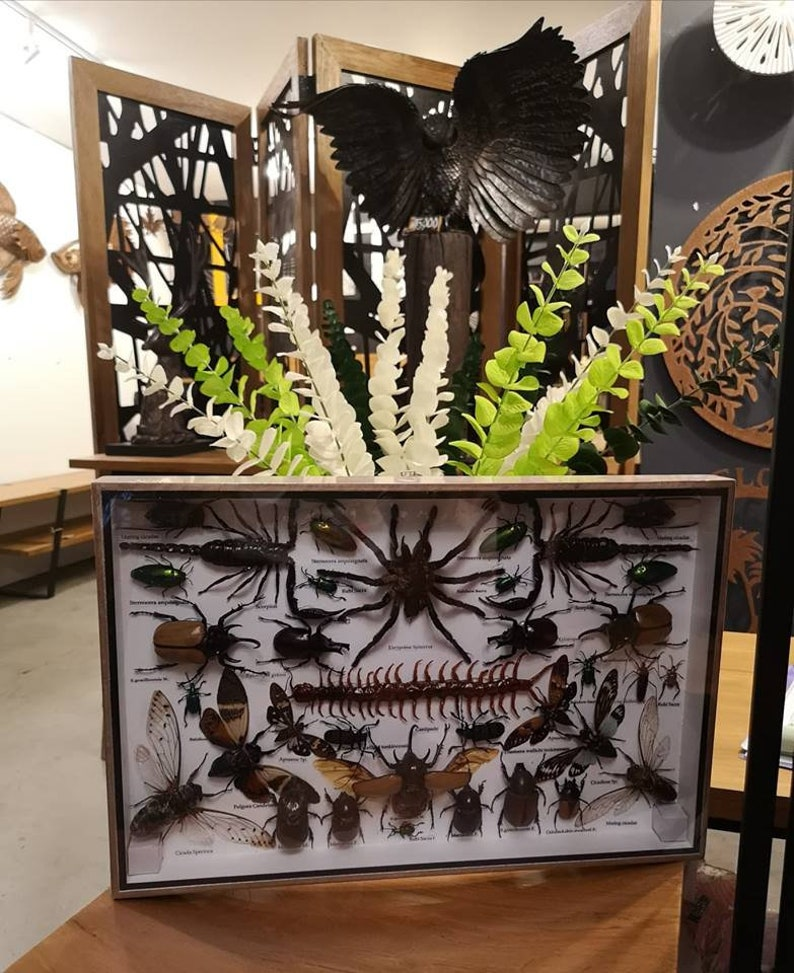 REAL Multiple INSECTS BEETLES Spider Cicada Scorpion Taxidermy Collection in wooden boxbig