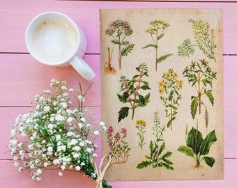 Medicinal Plants Vintage Print - Botany Illustration - Printable Art - Instant Download