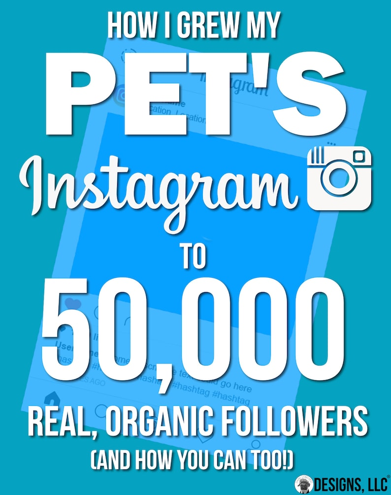 How To Make Your Pet Instagram Famous  How I Grew My image 0