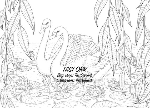 Swans in Pond Coloring Page
