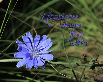 Happiness Blooms Standout Print - Fine Art Photography - Flower Photography - Quote Photography - Love is in the Air Collection