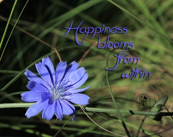 Happiness Blooms Print - Fine Art Photography - Flower Photography - Quote Photography - Love is in the Air Collection