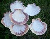 A set of six scallops...