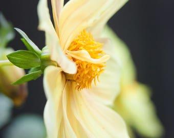 Flower, nature, wildlife, photography