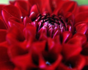 Flower, nature wildlife
