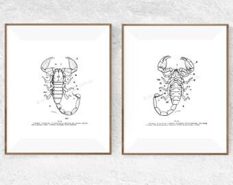 Printable art set - Vintage art set – Downloadable art set – Printable wall art set - Digital print set - Digital download – Scorpion prints