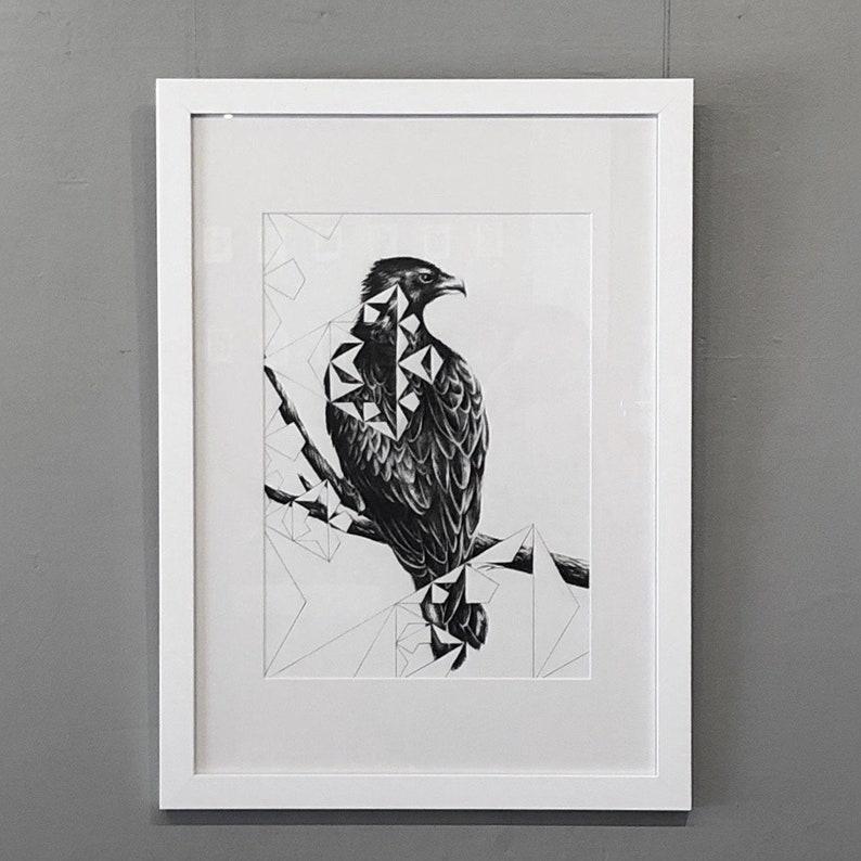 Wedge Tail  Original Charcoal Artwork Framed or Unframed image 0