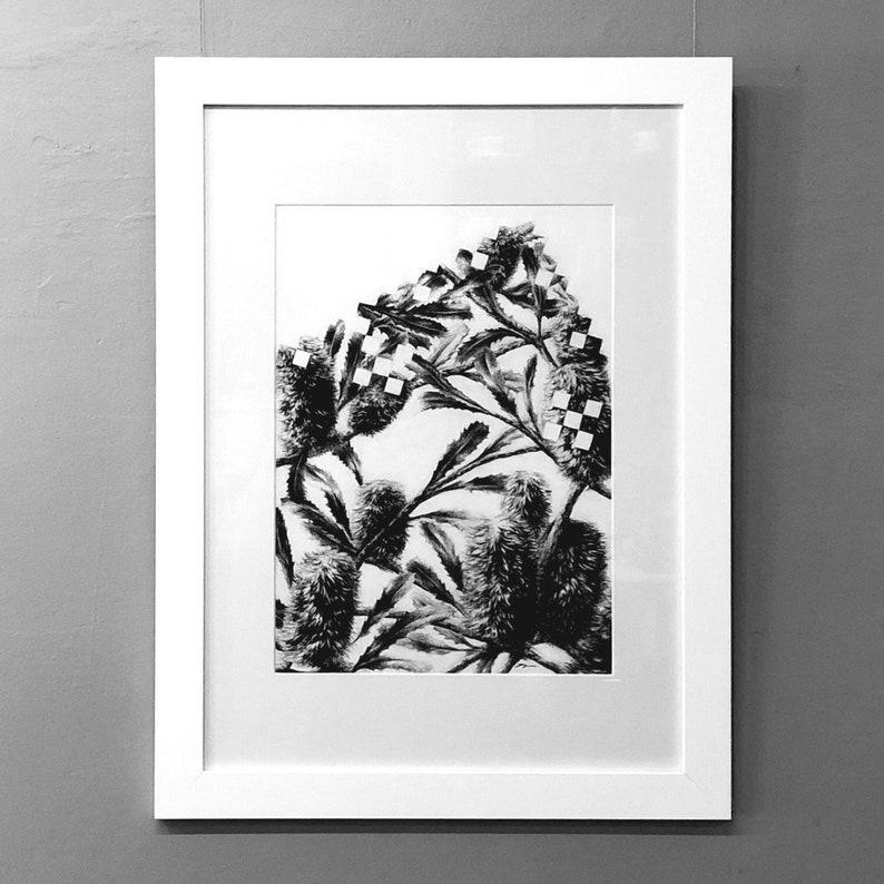 Banksia Koch Square  Original Charcoal Artwork Framed or image 0