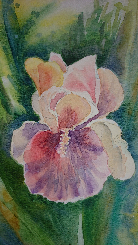Pink iris flower light and shade winsor newton artist etsy zoom izmirmasajfo