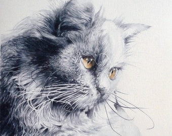 Watercolor cat Maine Coon 24 X 29.7 cm