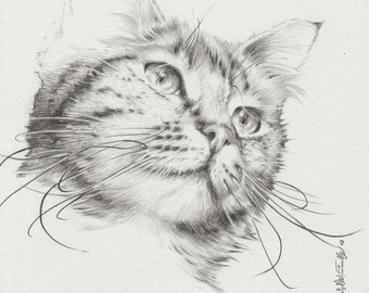Pencil drawing graphite grey cat 20 X 20 cm