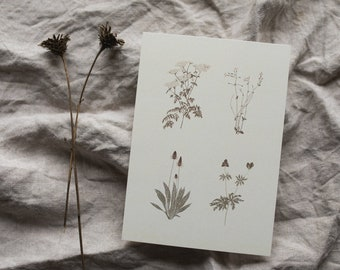 Postcard Winter Plants, Birthday Card, Greeting Card