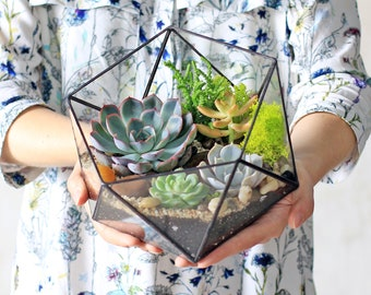 Icosahedron Glass Terrarium for plants