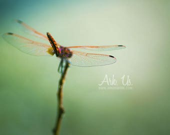 Poster orange Dragonfly wings transparent back