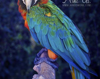 Post Parrot Macaw blue red yellow and green on a branch