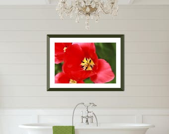 Red Tulip Art, Red Yellow and Green Floral Art Print, Colorful Nature Art, Modern Farmhouse Art Print, Modern Country Print