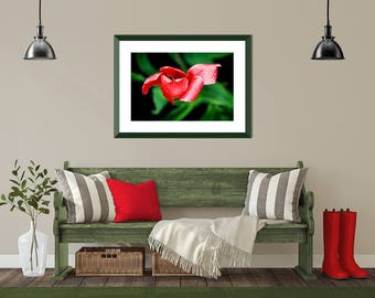 Modern Plant Art, Modern Floral Print, Modern Country Art, Red Black Floral Art, Red Bathroom Art, Colorful Photography, Red Flower Photo