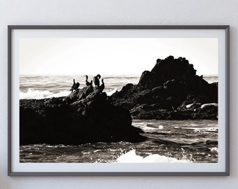 Sea Birds - Pescadero, California - Black & White Fine Art Photo Print