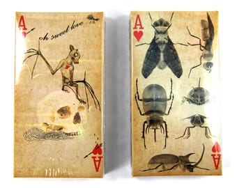 TWO Boxes of Decorative Matches Skeleton Bat Skull Beetle Insect Sweet Love Vintage Style Print Sepia 50 100 Matchbox Match Box Novelty