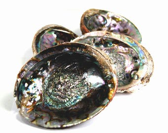 One 5 to 6 Inch Green Abalone Shell for Crafts or Incense Burner Large