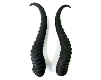 MATCHED PAIR 11 Inch Male Springbok Horns from Africa Maleficent Headdress 11