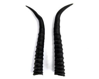 MATCHED PAIR Abnormal 6.5 Inch Female Springbok Horns from Africa Maleficent Headdress 22