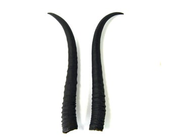 MATCHED PAIR 8 Inch Female Springbok Horns from Africa Maleficent Headdress