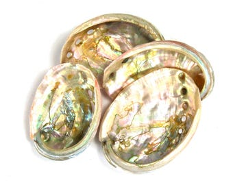 One 2 to 3 Inch Red Abalone Shell for Crafts or Small Incense Burner
