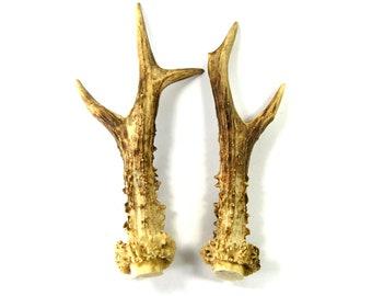 MATCHED PAIR 8 Inch Abnormal Roebuck Antlers Horns Deer Antler Set Real Genuine Unique Roe